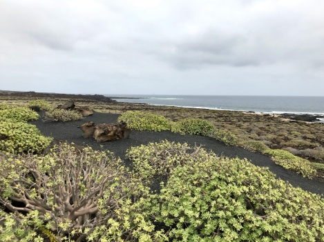 Coast near Jameos del Agua